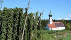 德国啤酒花种植地区——值得一去